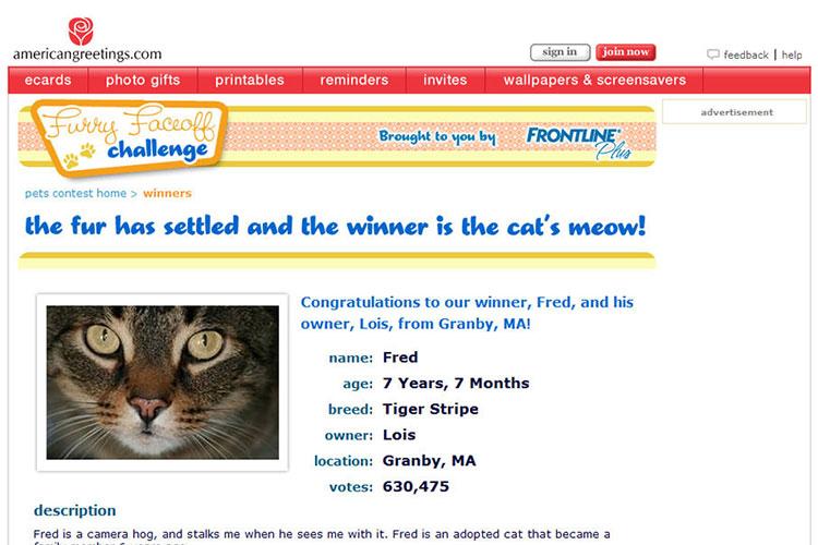 Adam bitner chicago user experience professional portfolio american greetings interactive pet contest m4hsunfo